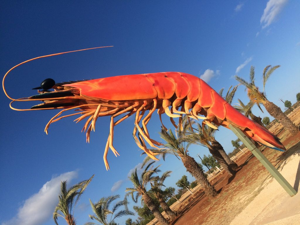 Exmouth Wholesalers for all your prawns, big or small.