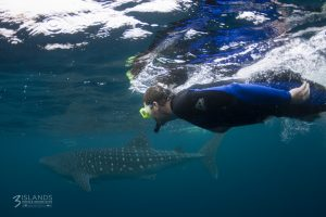 My Son with small Whale Shark