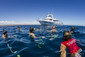 3 Islands Tour Boat - Swim with humpback whales